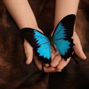 ButterflyFree
